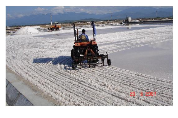 Kỹ thuật sản xuất muối phơi nước